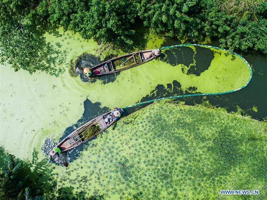 Collecting Duckweed with two boat