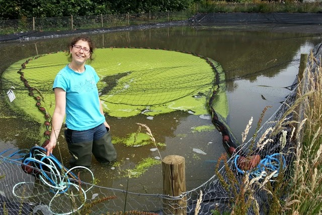 Collecting Duckweed With rope and net