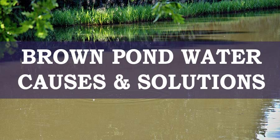 Brown Pond Water Causes and Solutions