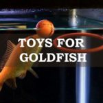 A goldfish playing with toys