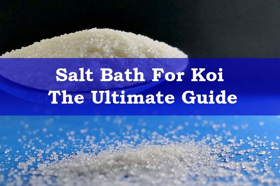 Koi Salt Bath