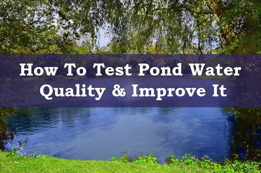 How to test pond water quality & improve it