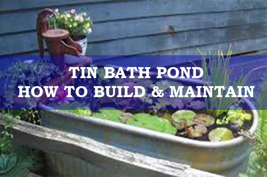 A Tin Bath Pond