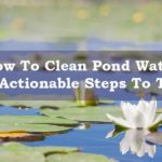 How To Clean Pond Water In 11 Actionable Steps