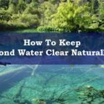 clear pond water naturally