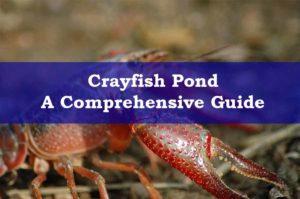 Crayfish Pond