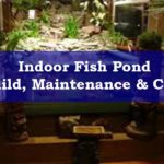 An Indoor Fish Pond