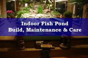 An Indoor Fish Pond