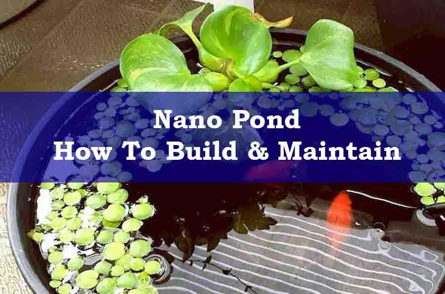 A Nano Pond