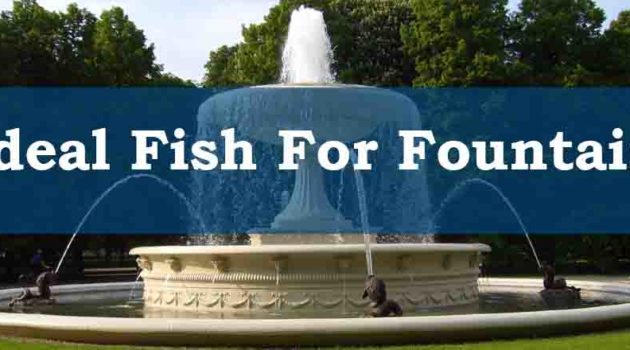 Fish For Fountain