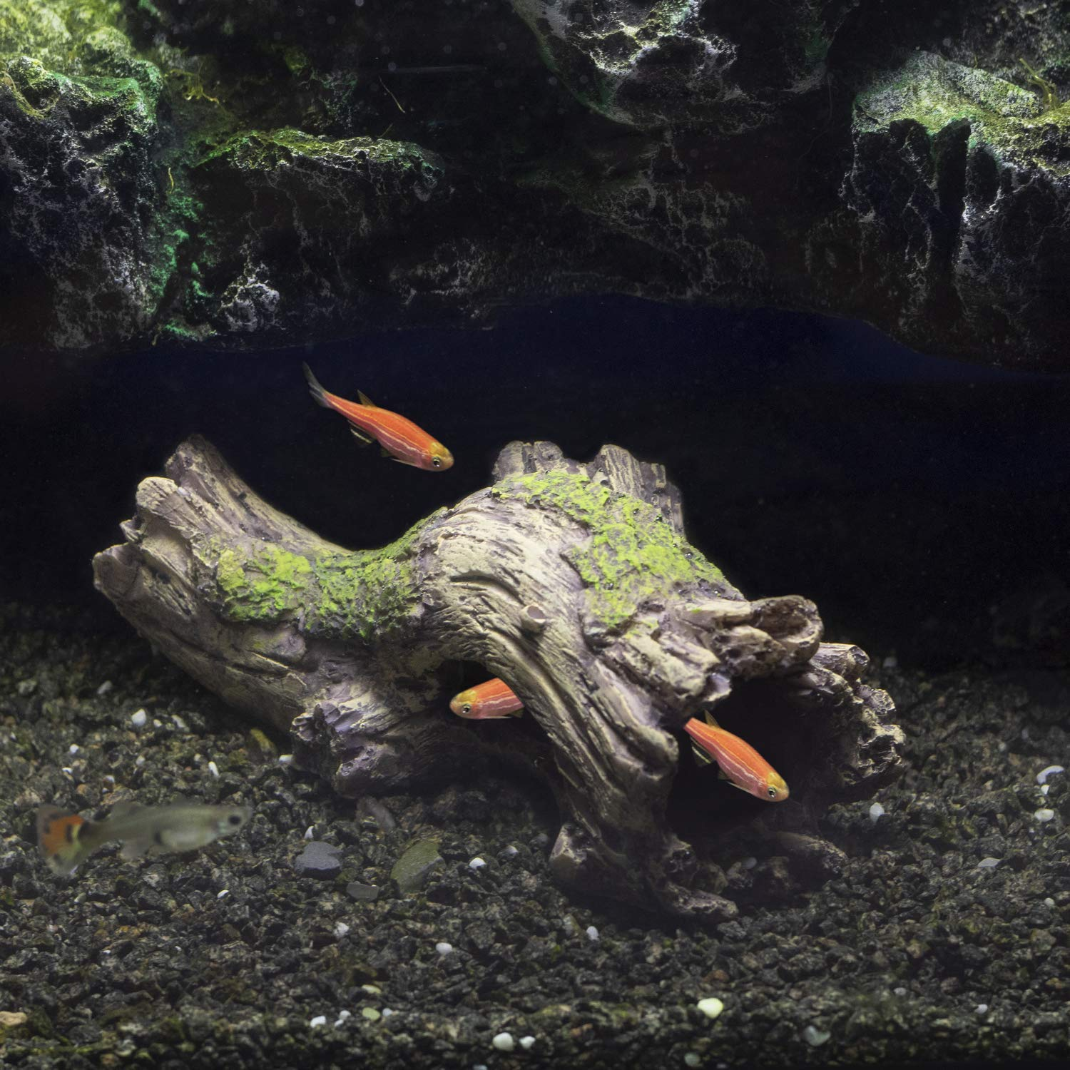 Fish hiding in a shelter