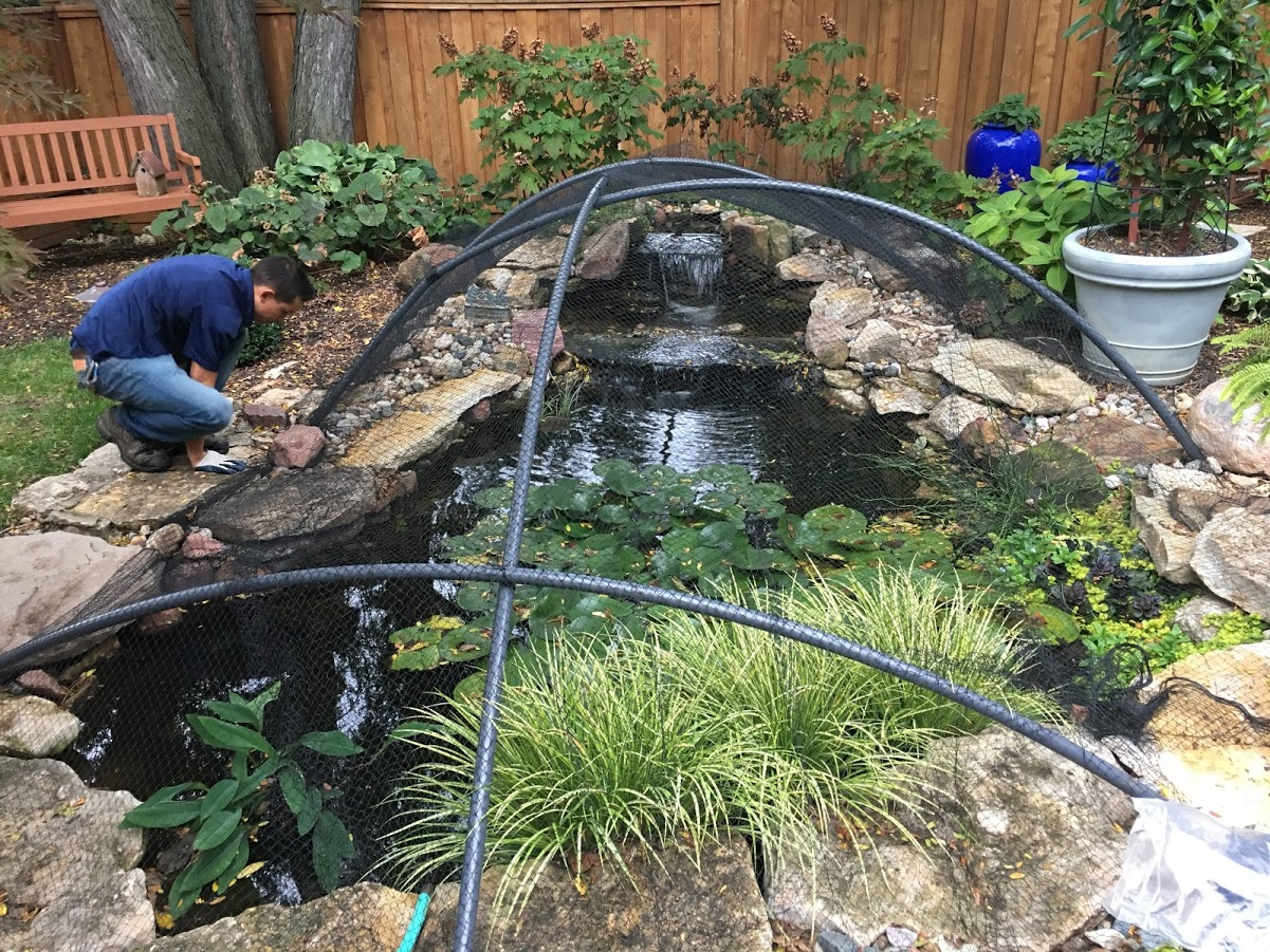 Pond covered with netting