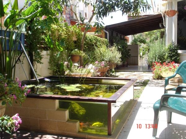 A small glass pond with water lily and fish