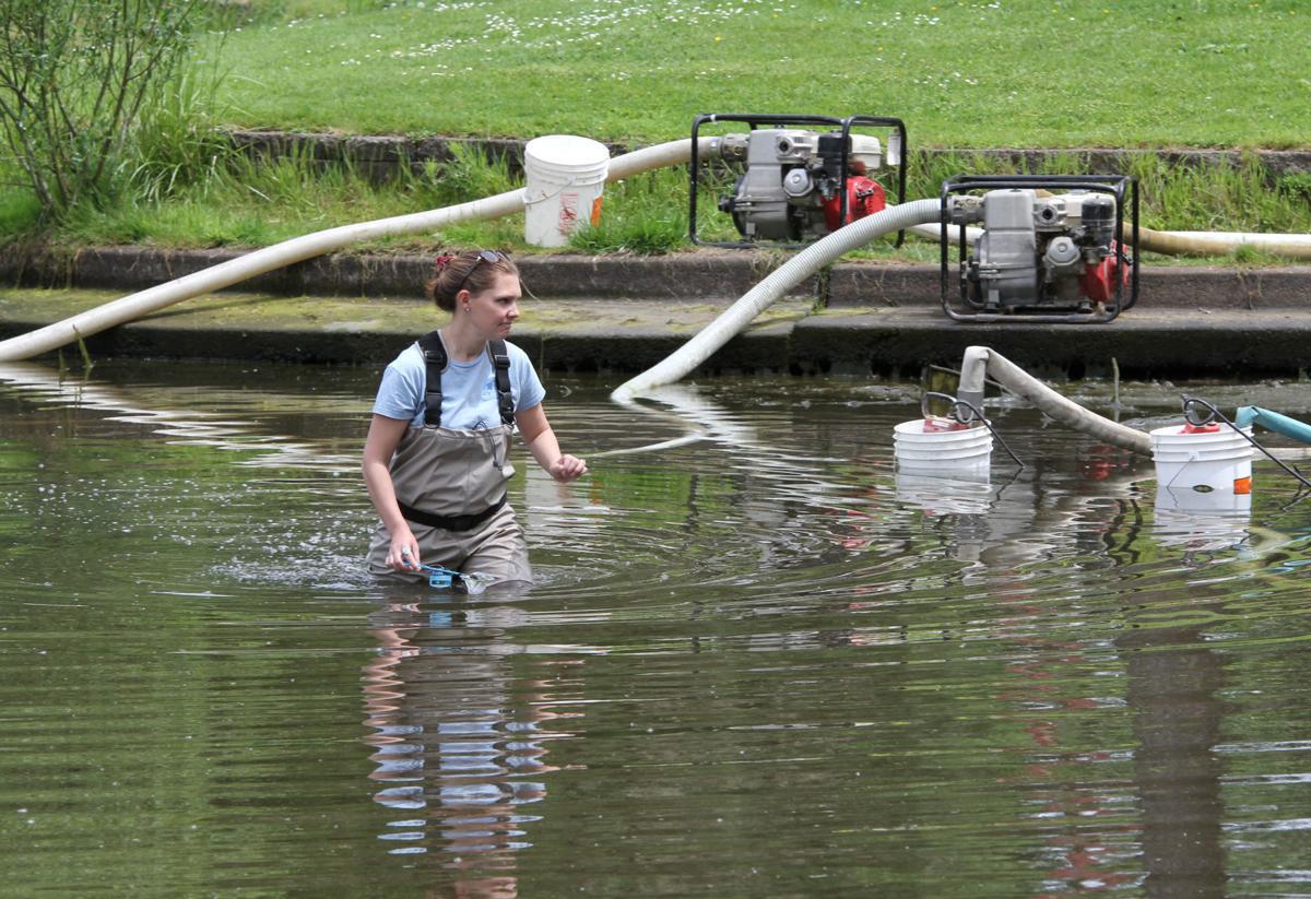 Draining a pond using pond pump.